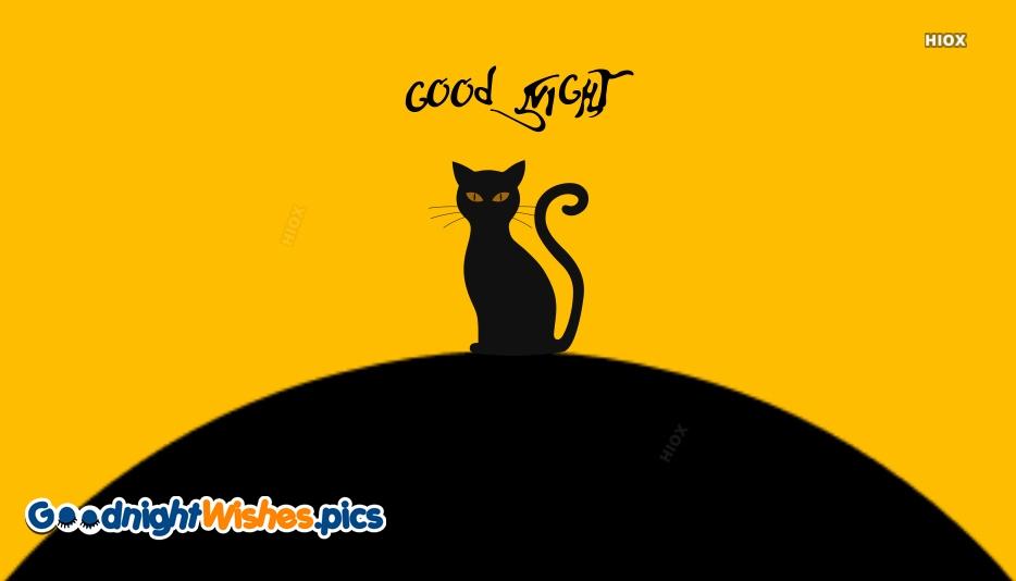 Cat Good Night Pictures