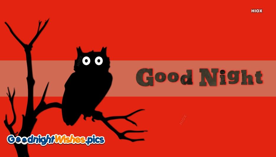Good Night My Night