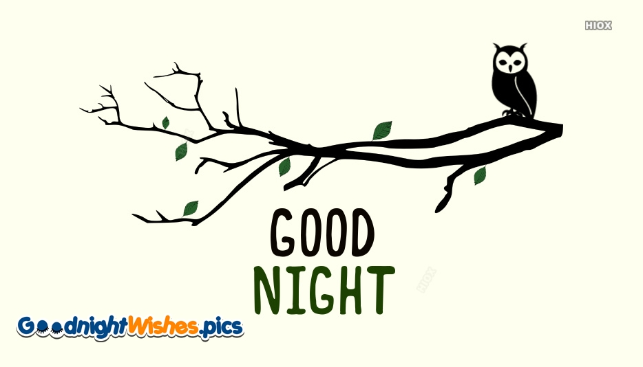 Good Night Owl Images