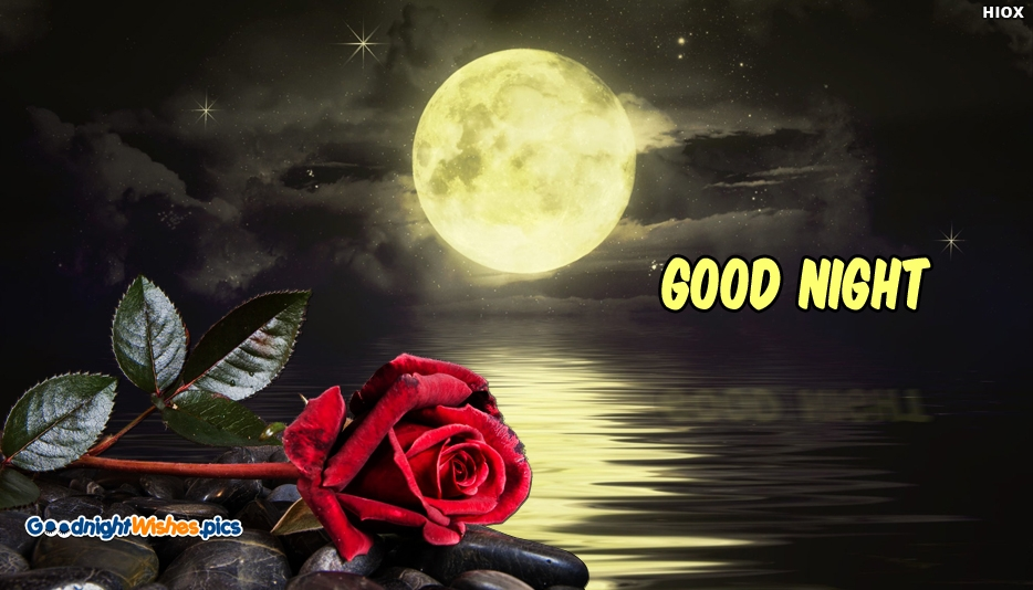 Good Night Red Rose HD Wallpaper @ GoodNightWishes.pics