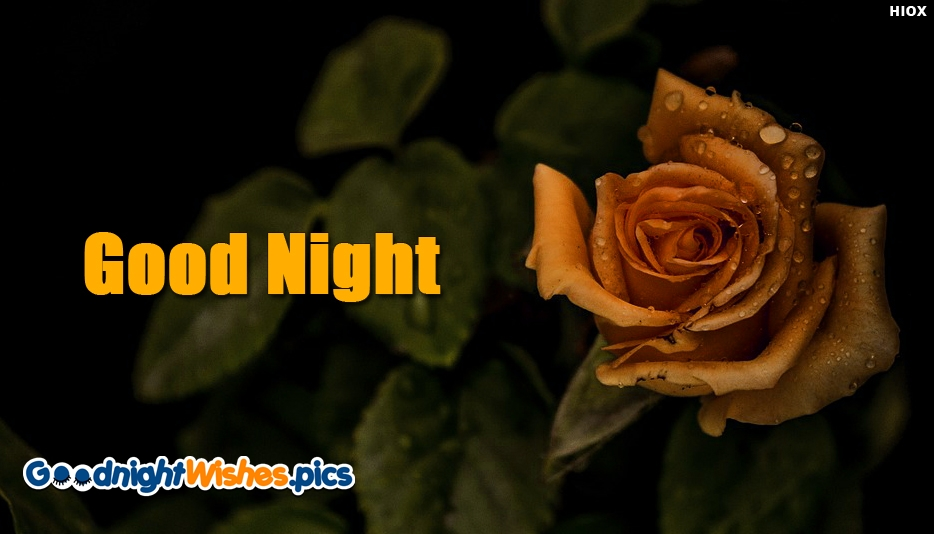 Good Night Rose Wallpaper Hd - Good Night Wishes for Wallpaper