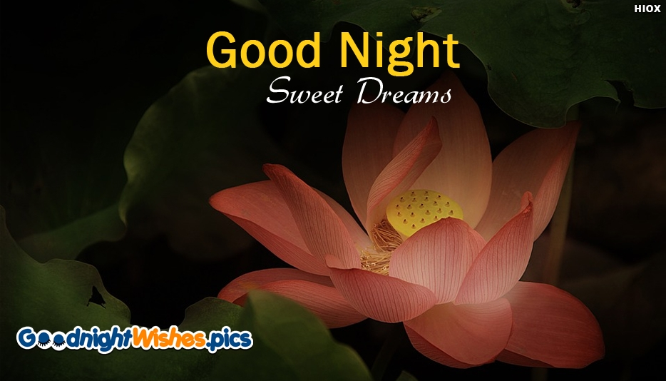 Good Night Sweet Dreams Hd Wallpaper Download - Good Night Wishes for Facebook