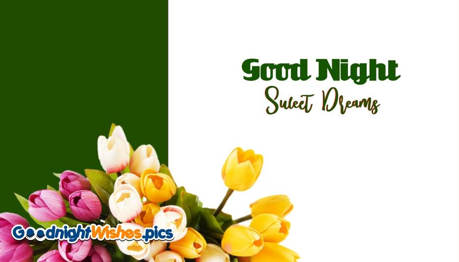 Good Night Sweet Dreams Tulip