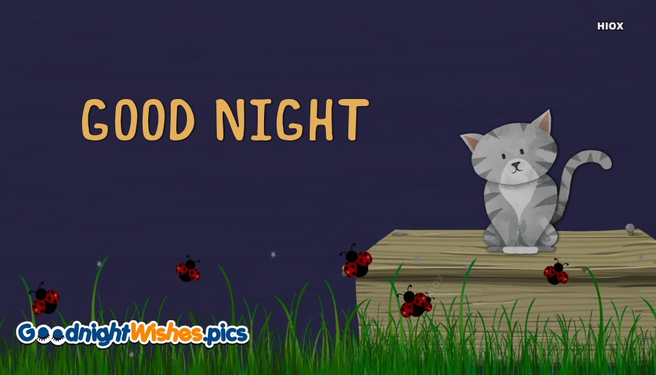 Good Night With Cat