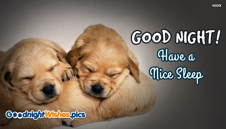 Good Night With Cute Dogs - Good Night! Have A Nice Sleep