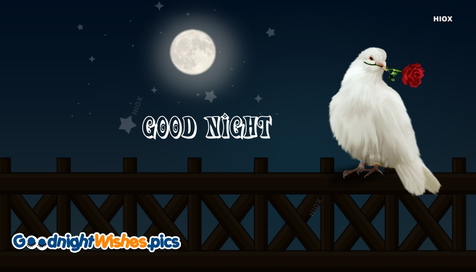 Good Night With Dove