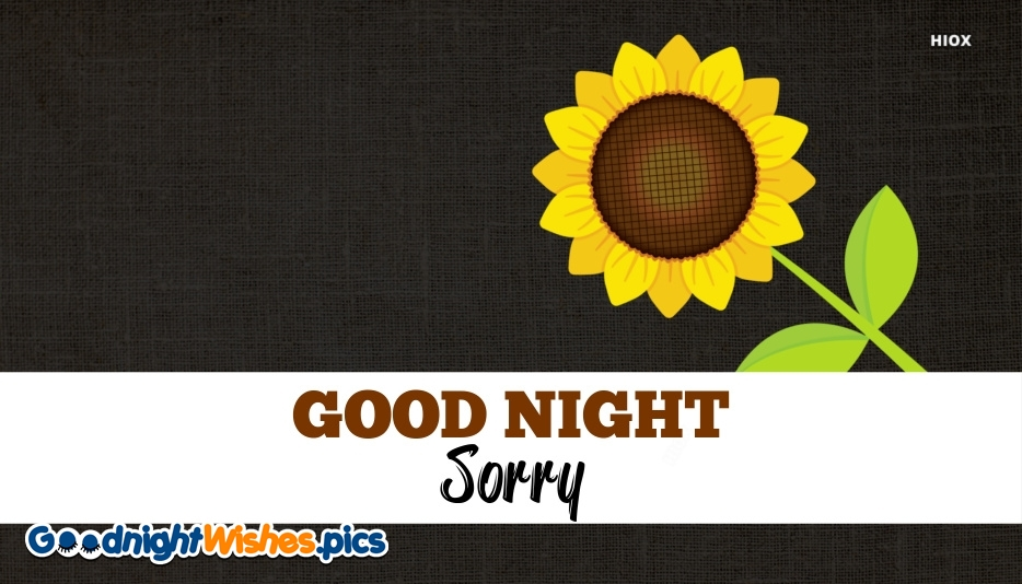 Good Night With Sorry