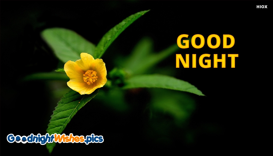 Good Night Wishes Images With Yellow Flowers