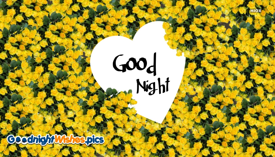 Good Night Yellow Rose