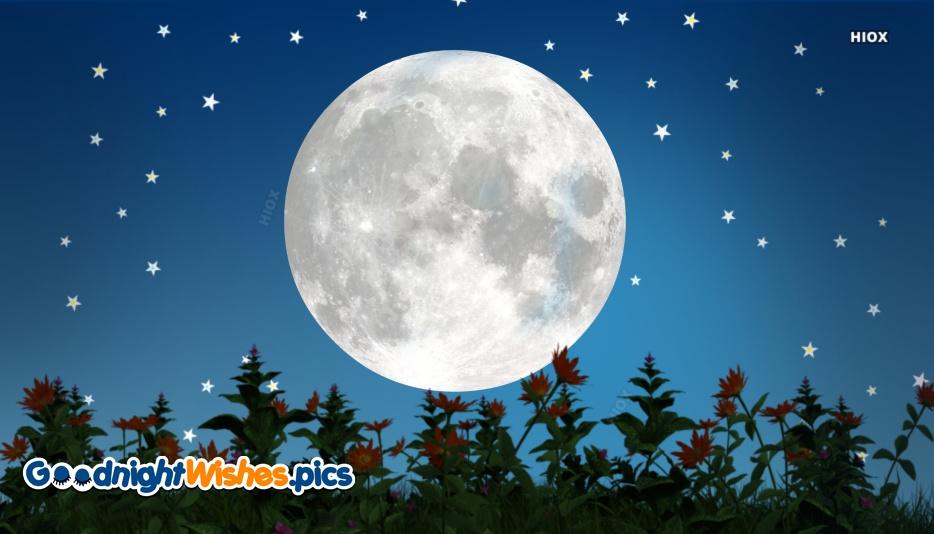 Happy Night Flower