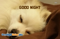 Good Night Dog