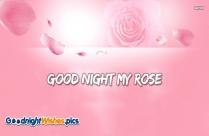Good Night My Rose