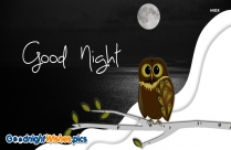 Good Night Wishes With Owl