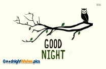 Good Night Owl Images