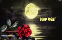 Good Night Red Rose HD Wallpaper