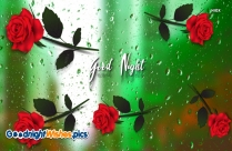 Good Night Rose