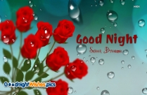 Good Night Sweet Dreams Red Rose