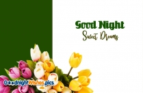 Good Night Jan