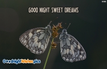 Good Night With Butterflies