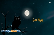 Good Night With Owl Images