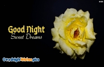 Good Night With Yellow Rose