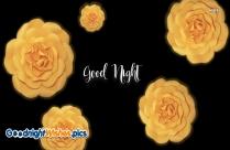 Good Night Yellow Rose